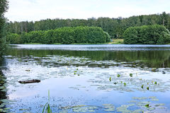 Forest Lake on a summer day Royalty Free Stock Photo