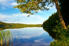 Forest lake, summer landscape Stock Photos