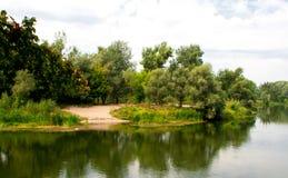 Forest lake, summer landscape Stock Photos