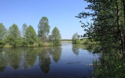 Forest lake. Summer landscape with forest lake stock photo