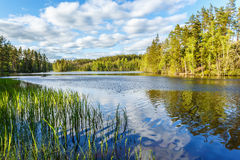 Forest lake at summer Stock Photography