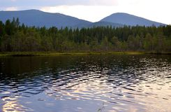 Forest lake in summer. Stock Photography
