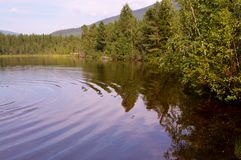 Forest lake in summer. royalty free stock photography