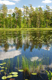 Forest lake in summer Scandinavia Royalty Free Stock Photography
