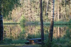 Forest lake in summer. Table and bench stock photo