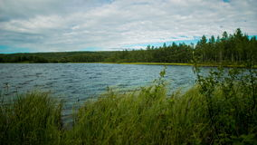 Forest lake in summer.Time laps. Moving clouds over the lake.Tall grass on the shore stock footage
