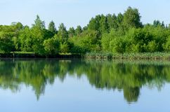 Forest lake in summer view, landscape stock photo