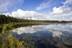 Forest lake in a Sunny day Stock Images