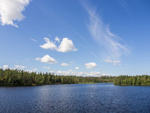 Forest lake in sunny day Stock Image