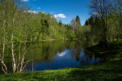 Forest Lake on a sunny day. Royalty Free Stock Photography