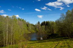 Forest Lake on a sunny day. Stock Photo