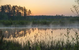 Forest lake at sunrise Stock Photos