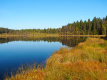 Forest Lake at sunrise morning. Grass and trees reflected in quiet water. Blue sky. Royalty Free Stock Photography