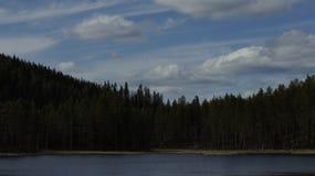 Forest Lake in Svezia Fotografia Stock Libera da Diritti