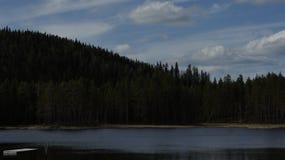Forest Lake in Svezia Immagine Stock