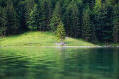 Forest and lake in the Switzerland. Forest and reflection on water surface. stock images