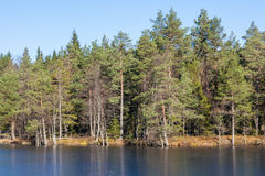 Forest lake Royalty Free Stock Photos