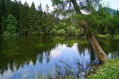 Forest lake in Tragoess Royalty Free Stock Photography