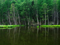 Forest on the lake. trees reflected in the water.Misty morning on the lake. early summer morning. drizzling rain. Stock Photography