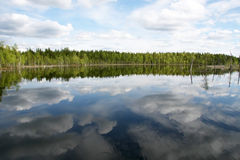 Forest Lake. Trees reflected in a water. Summer. Stock Photos