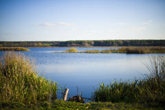 Forest lake under blue cloudy sky Stock Photography
