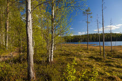 Forest lake under blue cloudy sky Stock Images