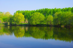 Forest lake Stock Images