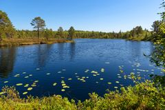Forest lake and vegetation on Anzersky Island. Arkhangelsk Region, Russia royalty free stock photo