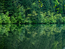 Forest and lake view Royalty Free Stock Photography