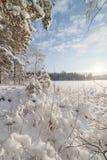 Forest Lake vinter, solig dag Royaltyfri Bild