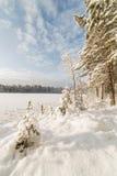 Forest Lake vinter, solig dag Royaltyfri Fotografi