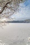 Forest Lake vinter, solig dag Arkivfoto