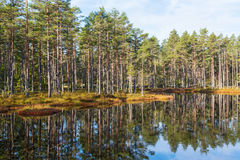Forest lake with water reflections Stock Image