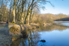 Forest lake. Waterside with trees and reed royalty free stock photos
