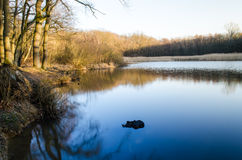 Forest lake. Waterside with trees and reed stock images