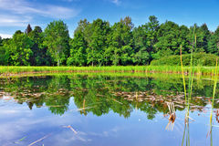 The forest lake, wild landscape. Russia Royalty Free Stock Photo