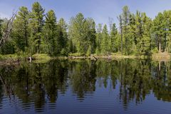 Forest lake, wild landscape Royalty Free Stock Images