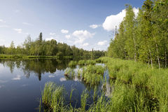Forest lake, wild landscape Stock Photo