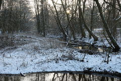 Forest with lake in the winter Stock Image