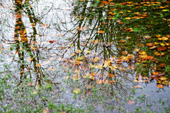 Free Forest Lake With Reflections Of Trees Stock Photos - 45630953