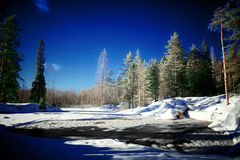 Free Forest Lake With Water Torrent Royalty Free Stock Photos - 11679538