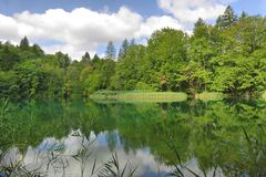 Forest and lakes Royalty Free Stock Image