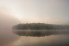 Forest at lakeside at foggy morning Stock Photography