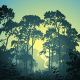 Forest Landscape. A Forest Landscape with Trees and Sunset Sunrise Royalty Free Stock Images