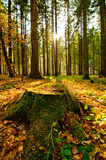 Forest landscape. With tree trunk royalty free stock image