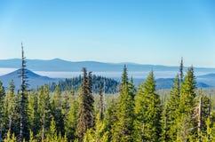 Forest Landscape royalty-vrije stock afbeelding