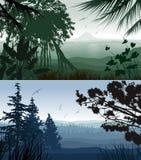 Forest Landscape Royaltyfri Foto