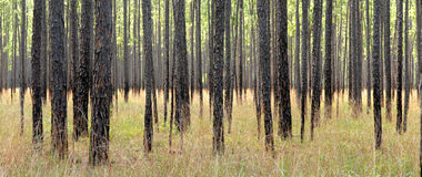 Forest Landscape Royalty Free Stock Photo