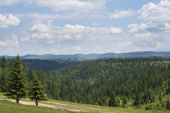Forest landscape. Specific for Apuseni Mountains,Romania Royalty Free Stock Photography