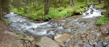 Forest landscape Stock Images
